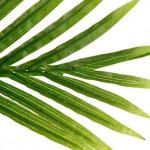 Palmier artificiel en pot H170 cm