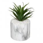 Plante dans Pot – H 17,5 cm