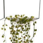 Plantes suspendues dans supports hexagones, Décoration murale