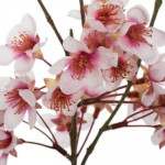 Vase & Cerisier ,corde 46 cm