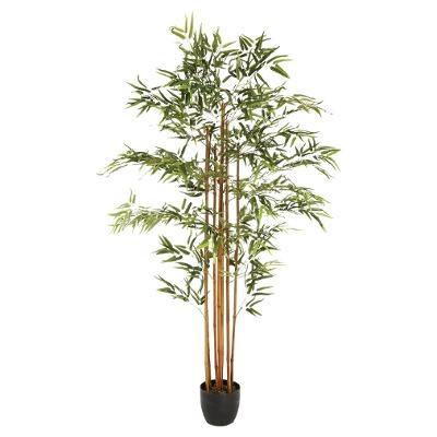 Bambou H180