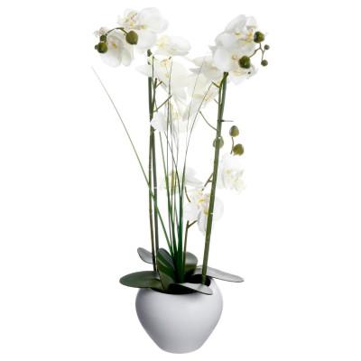 Orchidée & vase céramique
