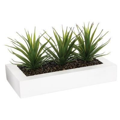 Centre de table Aloe Vera 30 x 14 cm